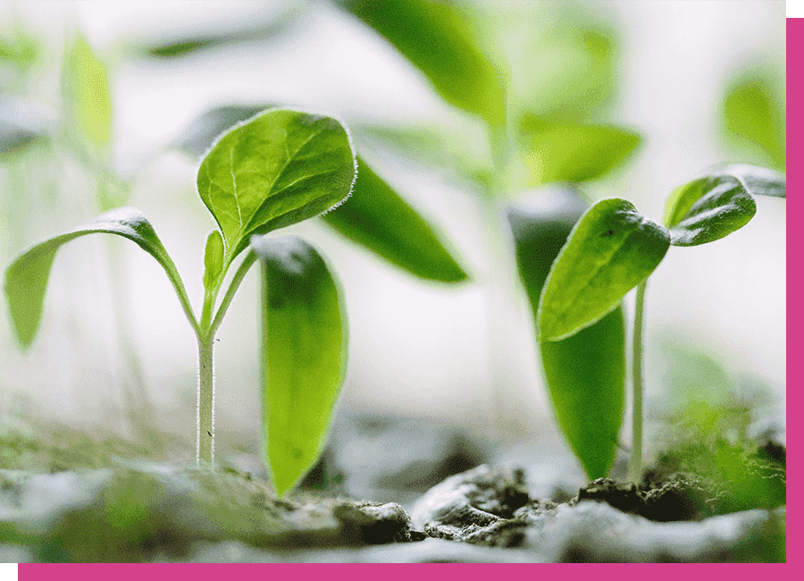 Sustainable Plants by Fair Flora