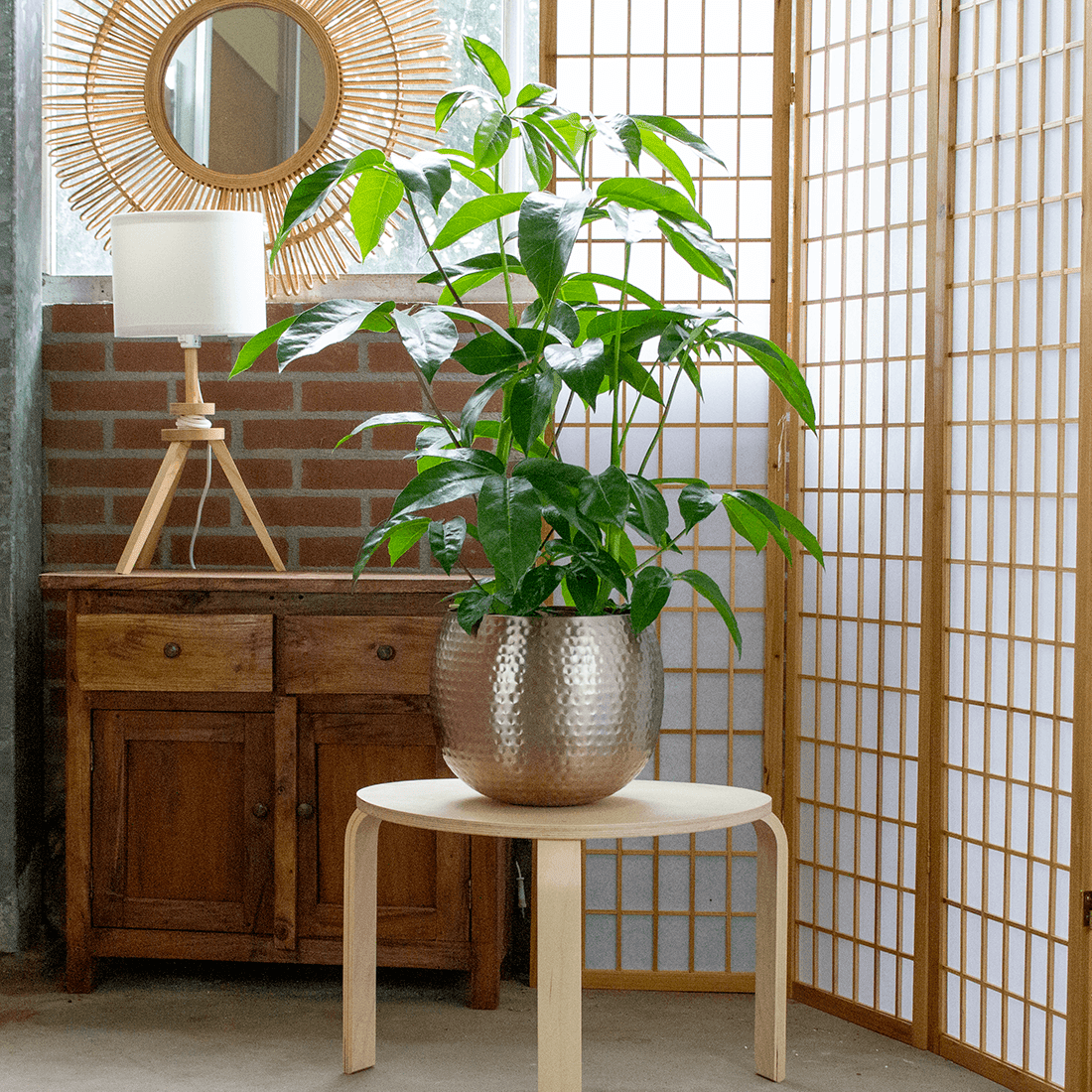 Indoor Plant – Umbrella tree in rose gold metal pot as a set – Height: 100 cm