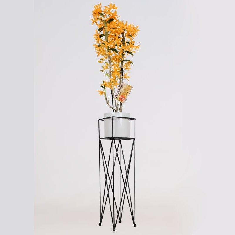 Orchid – Bamboo Orchid in white ceramics pot with stand as a set – Height: 70 cm, 2 stems, orange flowers